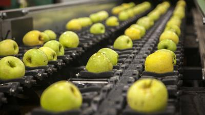 Washington's tree-fruit industry is ripe for consolidation because of an oversupply of product and packing houses, industry observers say.
