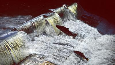 They can ensure a better future for all by doing their part to save the salmon